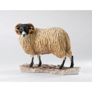 Border Fine Arts Contemporary Classic Figurine - Ram