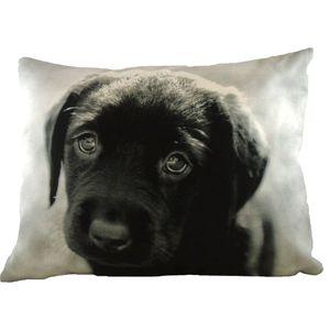 Evans Lichfield Villager Jim Collection Cushion: Puppy Eyes 43cm x 43cm