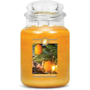 Goose Creek Large Jar Candle - Orange Grove