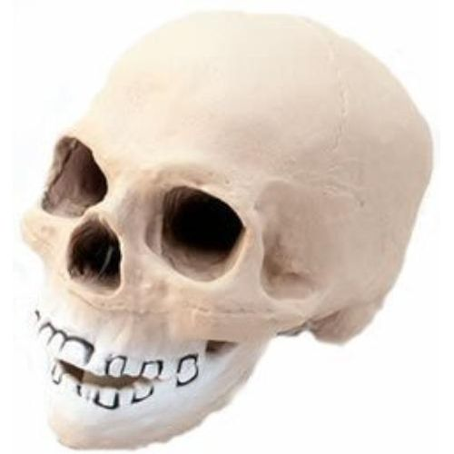 fancy dress and halloween costume accessory  and party decoration vinyl skull head 20cm